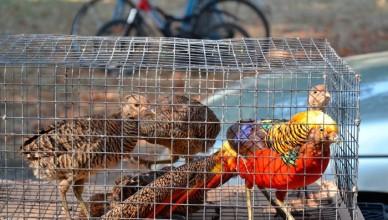 Международная выставка животных и птиц